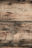 Trunk of a tree. Detail of a wooden board Royalty Free Stock Images