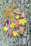 Trunk of tree with different autumnal leaves Stock Image
