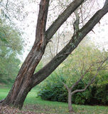 The trunk of the tree in the foreground in the park. Royalty Free Stock Photos