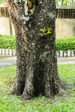 Trunk Tree Royalty Free Stock Images