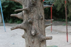 The trunk of the tree with lots of pruned branches. The trunk of old pruned tree on the background of children's playground Stock Photos