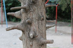 The trunk of the tree with lots of pruned branches Royalty Free Stock Images