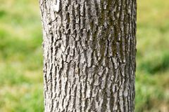 Trunk of a tree in a park on the nature.  Stock Photo