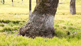 Trunk of a tree in a park on the nature Royalty Free Stock Images