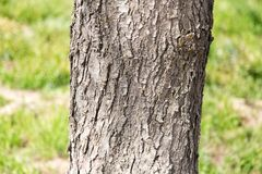 Trunk of a tree in a park on the nature Royalty Free Stock Photo
