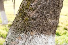 Trunk of a tree in a park on the nature.  Stock Images