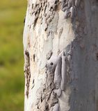 Trunk of a tree in a park on the nature.  Stock Photography