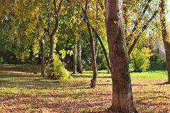 Trunk of tree in park among yellow leaves Stock Image