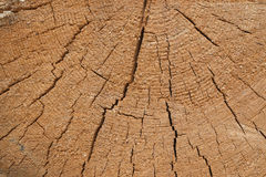 Trunk of a tree is sawn crosswise Stock Images