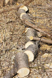 The trunk of a tree, sawn to chocks Stock Photography