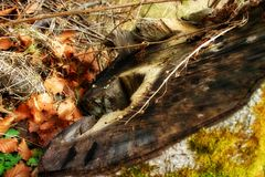 Trunk of a tree. A tree stump in autumn light Stock Photography