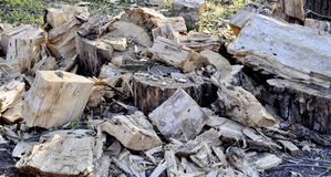 Trunk of tree torn to pieces with an ax Stock Photos