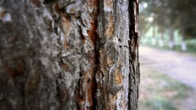 The trunk of a tree stock footage