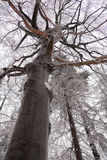 Trunk of the tree in winter Stock Image