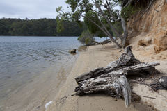 Trunk and trees at the Mallacoota Inlet Royalty Free Stock Photo