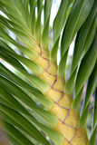 Trunk of tropical plant Stock Photo