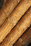 A trunk wall in Longtan valley in Luoyang Stock Images