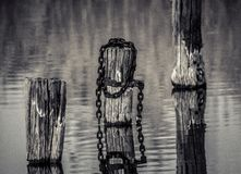 Trunk in the water. Wood stump in the water with fisherman during sunset Stock Images