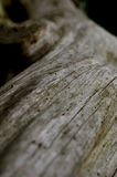 Trunk, wood, forest and nature. Stock Photos