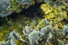 Trunkfish repéré par jaune Photographie stock libre de droits