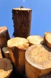 Trunks. A huge assortment of trunks shot at a sout-west German sawmill Stock Photos