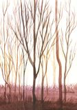 Trunks of bare trees in the sun. Illustration, landscape. vector illustration