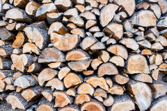 Trunks cutted Royalty Free Stock Image