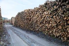 Trunks felled Stock Image