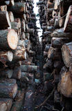 Trunks felled. And piled up for the industry Stock Photo
