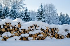 Trunks of felled trees and stacked pile Stock Image
