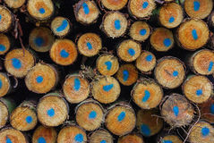Trunks. Forest wood production industry Royalty Free Stock Photos