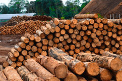 Trunks. On a forestry. The primary forest industry produces lumber, pulp and paper Stock Photo