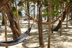 Trunks and Hammocks Stock Photography