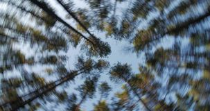 Trunks of high pine trees, stretching up into the sky camera rotates. Trunks of high pine trees, stretching up into the sky, camera fast rotates stock video