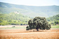 Trunks in the middle of the mediterranean forest royalty free stock photography