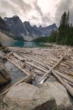 Trunks on Moraine Lake. In Canada Stock Photos