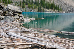Trunks on Moraine Lake. In Canada Royalty Free Stock Photography