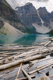 Trunks on Moraine Lake. In Canada Royalty Free Stock Images