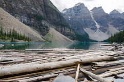Trunks on Moraine Lake. In Canada Stock Image