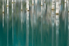 The trunks of pine trees reflected in the water Royalty Free Stock Photos