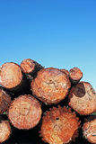 Trunks of pine wood. Several trunks of pine wood Stock Photography