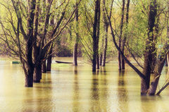 Trunks in the river floods in Serbia Royalty Free Stock Photo