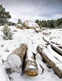 Trunks on the snow. Snowy mountain landscape with some trunks on the foreground used as a vanishing point Stock Images