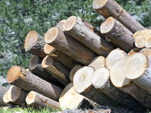 Trunks stacked  appear like  cannons Royalty Free Stock Photo