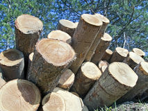 Trunks stacked  appear like  cannons Royalty Free Stock Photography
