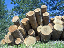 Trunks stacked  appear like  cannons Royalty Free Stock Image