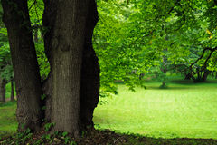 Trunks of trees Stock Image