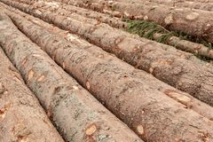 Trunks of Trees Background. Tree Logs Felling of the Forest. Fire Wood Logs. Trunks of Trees Background. Brown Tree Logs Felling of the Forest. Fire Wood Logs stock photography