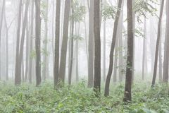 Trunks of trees in a floodplain forest Royalty Free Stock Photo
