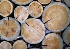 The trunks of the trees are folded like a partition. Lumber royalty free stock photography